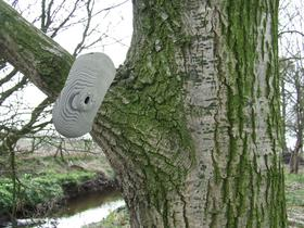Camo Camera on a tree branch