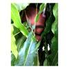 Yomna Saad's picture